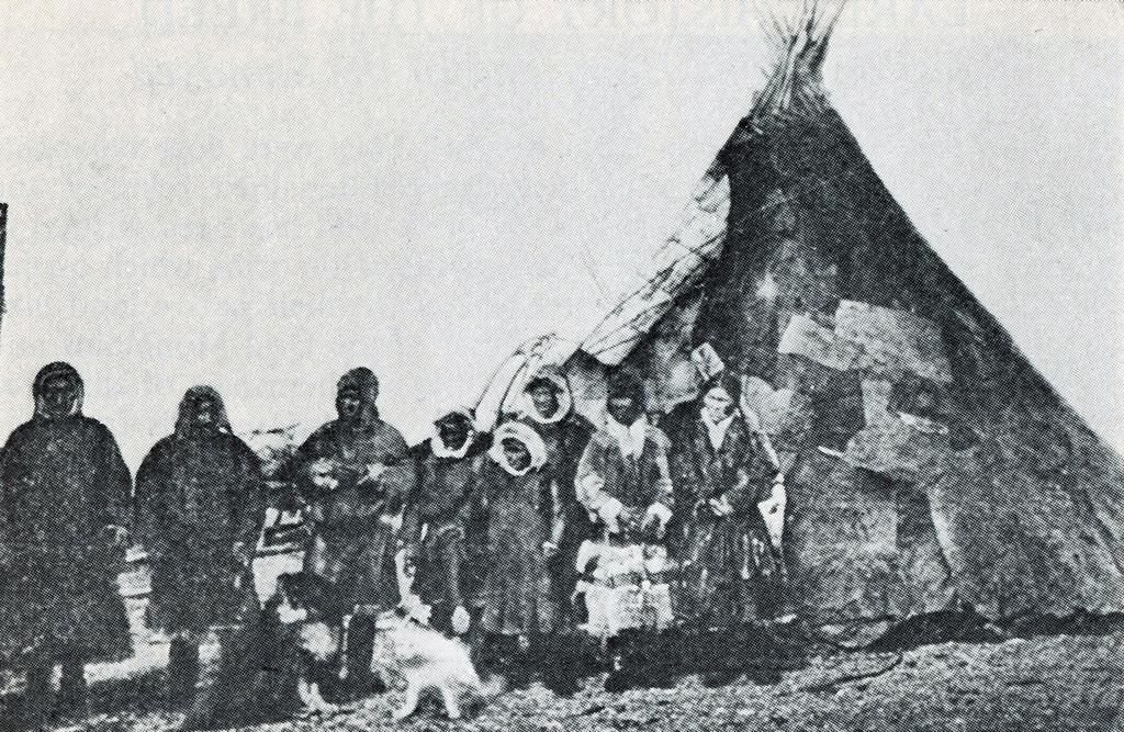 Samoyede met hun honden